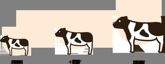 牛の成長過程