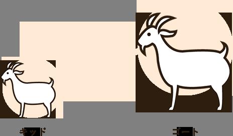 山羊の成長過程
