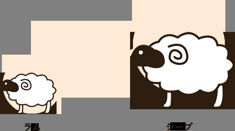 羊の成長過程